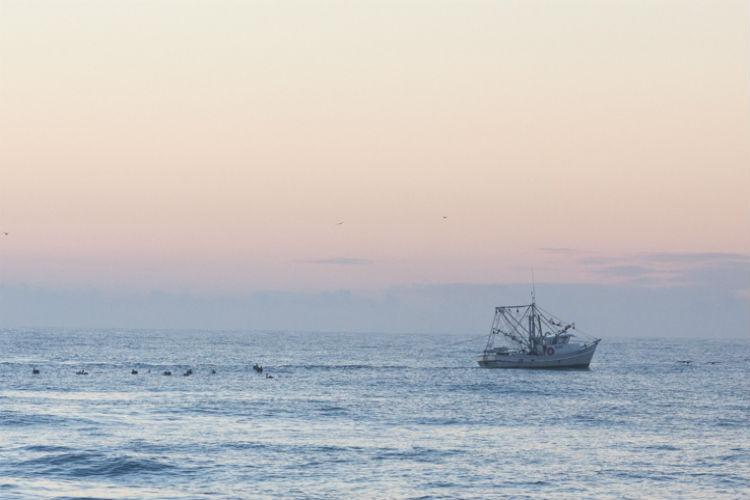 gallery shrimp boat