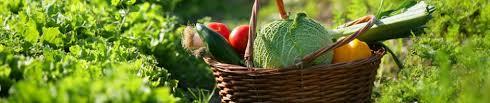 veggie header